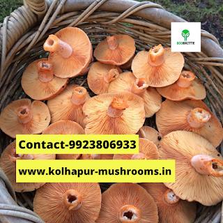 Oyster Mushroom Powder price in India