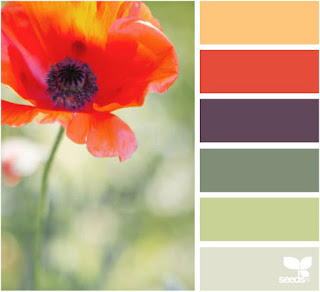 design seeds floral garden palette of a red poppy