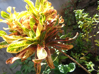 Bunga Puding
