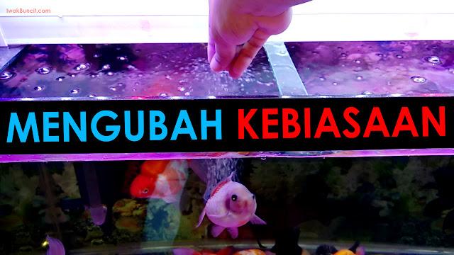 3 Cara Merubah Kebiasaan Makan Ikan Mas Koki: Floating ke Sinking - Tenggelam ke Mengambang