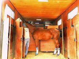 Transportar Cavalos - Cuidados Necessários