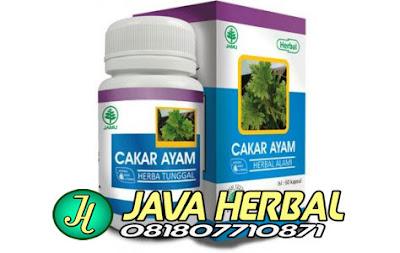 obat herbal untuk kangker payudara keputihan