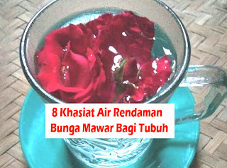 manfaat teh bunga mawar segar