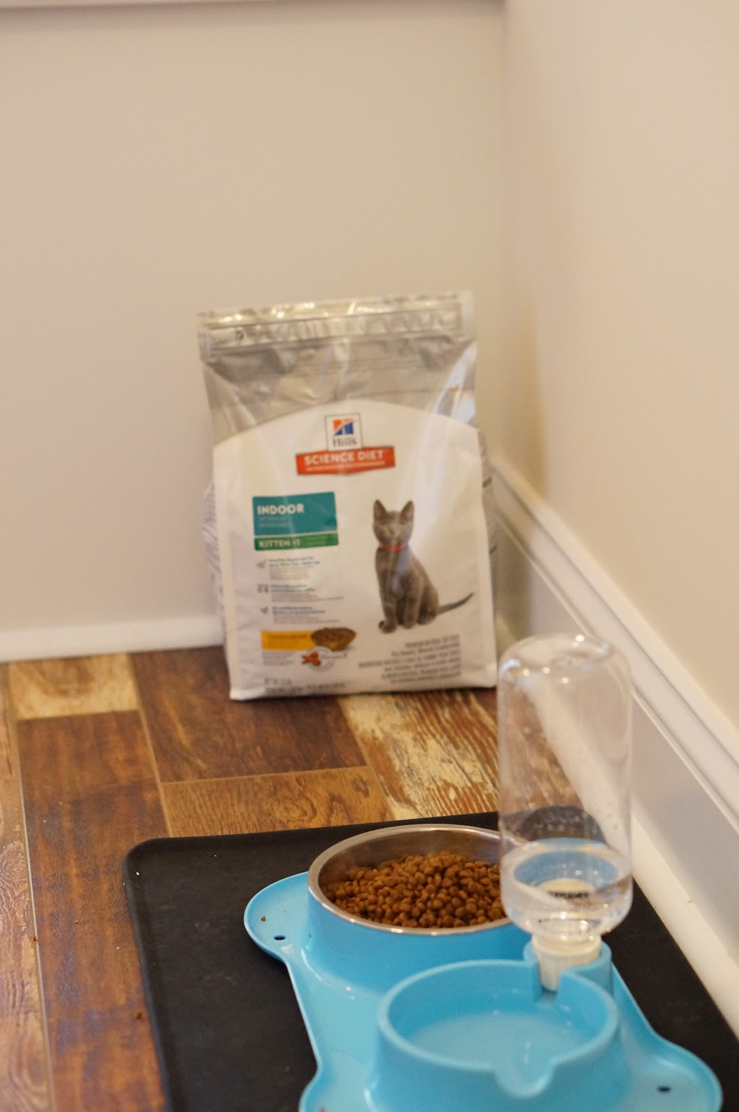 ADOPTING A KITTEN | SCIENCE DIET® by North Carolina lifestyle blogger Rebecca Lately
