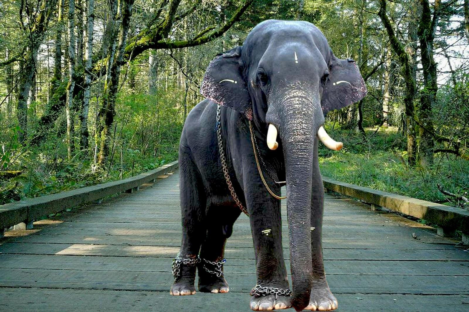 Kerala Elephants Images | Kerala elephants wallpapers HD ...