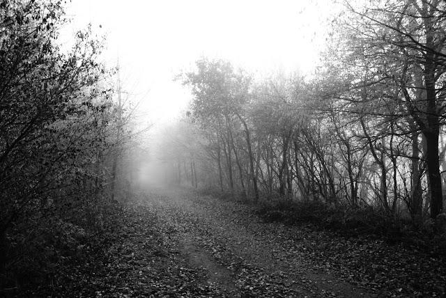 Ein Schwarz/weiß Foto. Der Blick fällt auf den langen Bahndamm der von kahlen Bäumen umgeben ist