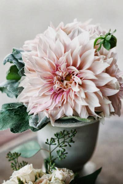 lovely light pink dahlia