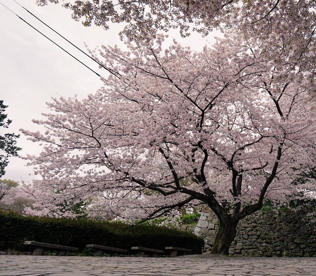 http://www.instagram.com/bene_fukuoka/