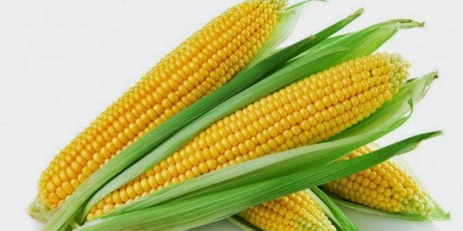 Diet Makanan Rebus Ketahui Manfaat dan Bahayanya!