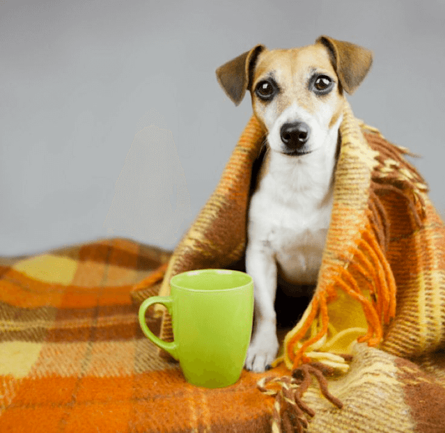 Why Do Dogs Shiver?