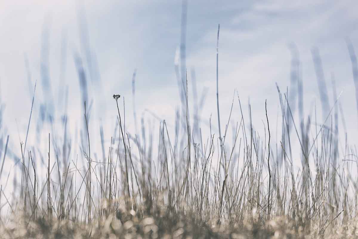 Suomenlinna, Helsinki, Sveabor,g visithelsinki, island, saari, Visualaddict, valokuvaaja, Frida Steiner, photographer, visualaddictfrida, tourism, worthvisiting, heinät