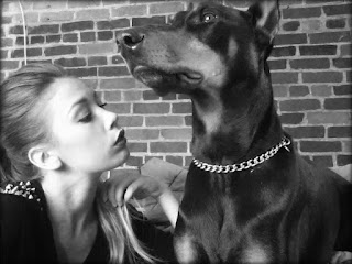 cães e o afeto
