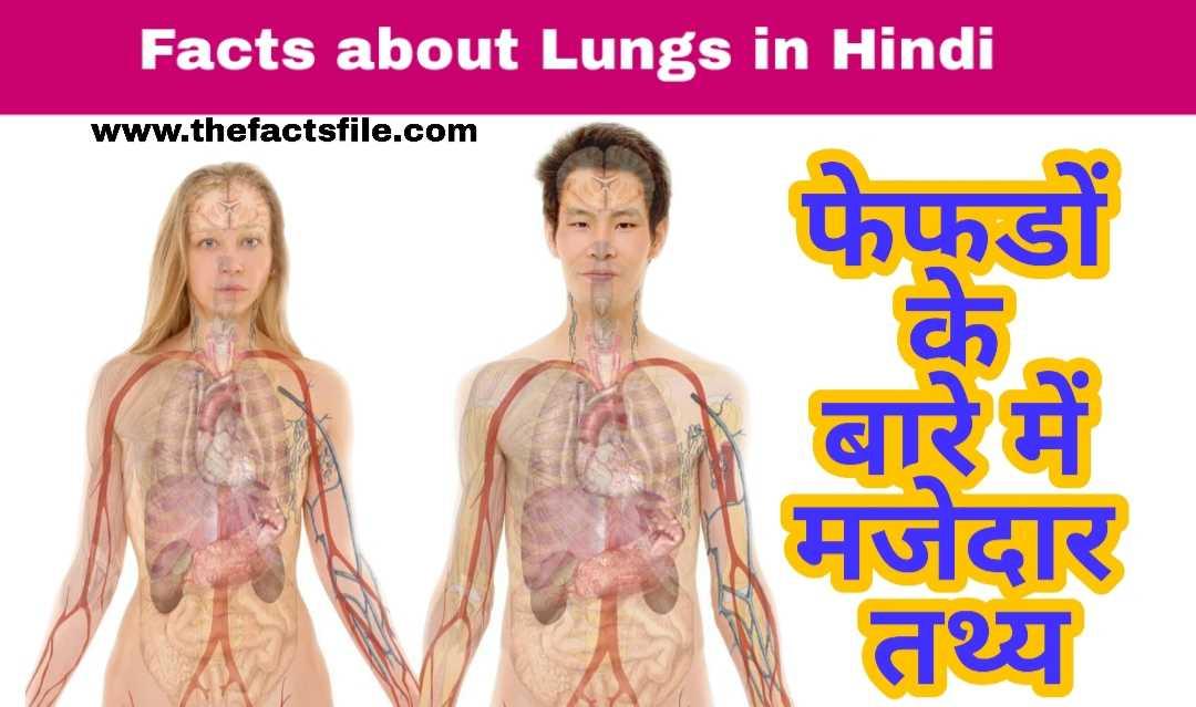 फेफडों के बारे में 18 मजेदार तथ्य - Interesting Facts about Lungs in Hindi