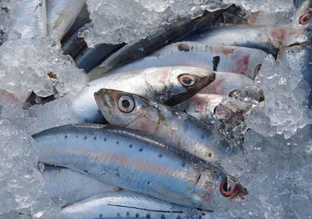 cara memilih ikan segar
