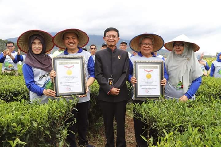 Pecahkan Rekor MURI, 3.805 Orang Dilibatkan Petik Daun Teh Kayu Aro