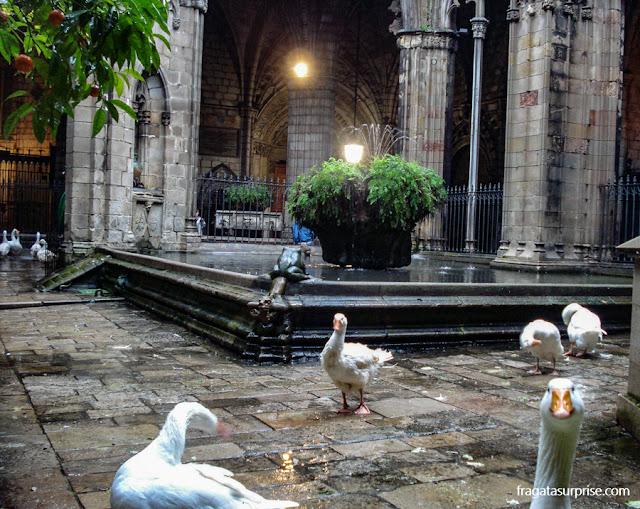 Cisnes de Santa Eulália na Catedral de Barcelona