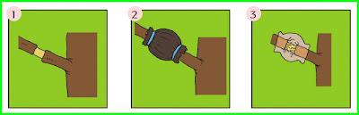 jawaban tema 1 kelas 6 selamatkan makhluk hidup subtema 3 pembelajaran 3