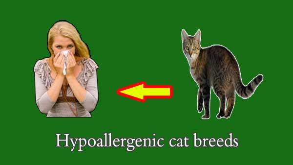 all hypoallergenic cat breeds