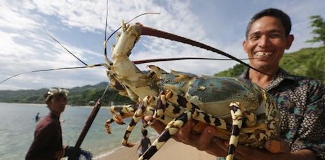 Susi Menangis Karena Lobster, Bagaimana Dengan Air Mata Nelayan?