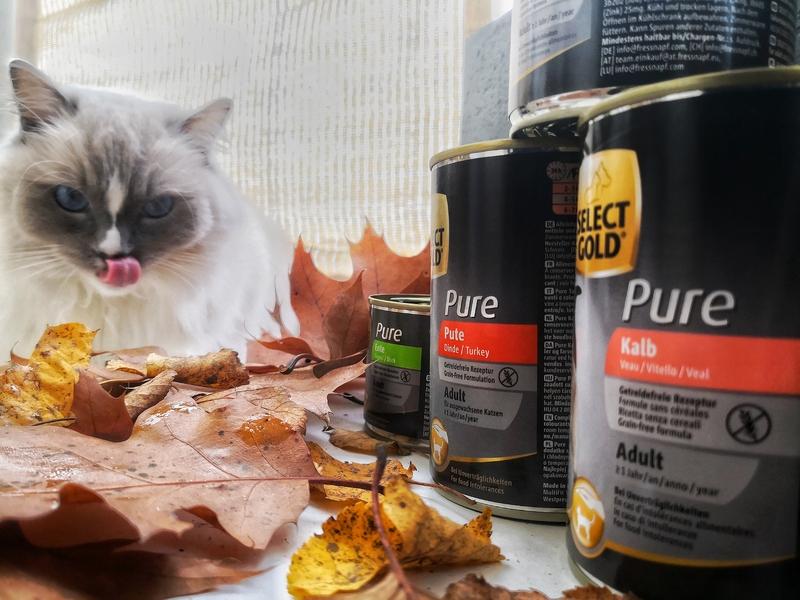 Select Gold, Select Gold Pure, Select Gold opinie, Select Gold Pure dla kota, karma mokra dla kota, karma monoproteinowa dla kota, karma monobiałkowa, dobra karma monoproteinowa dla kota, dobra karma z maxizoo, karma z maxizoo, maxizoo, kot testuje, koci influencer