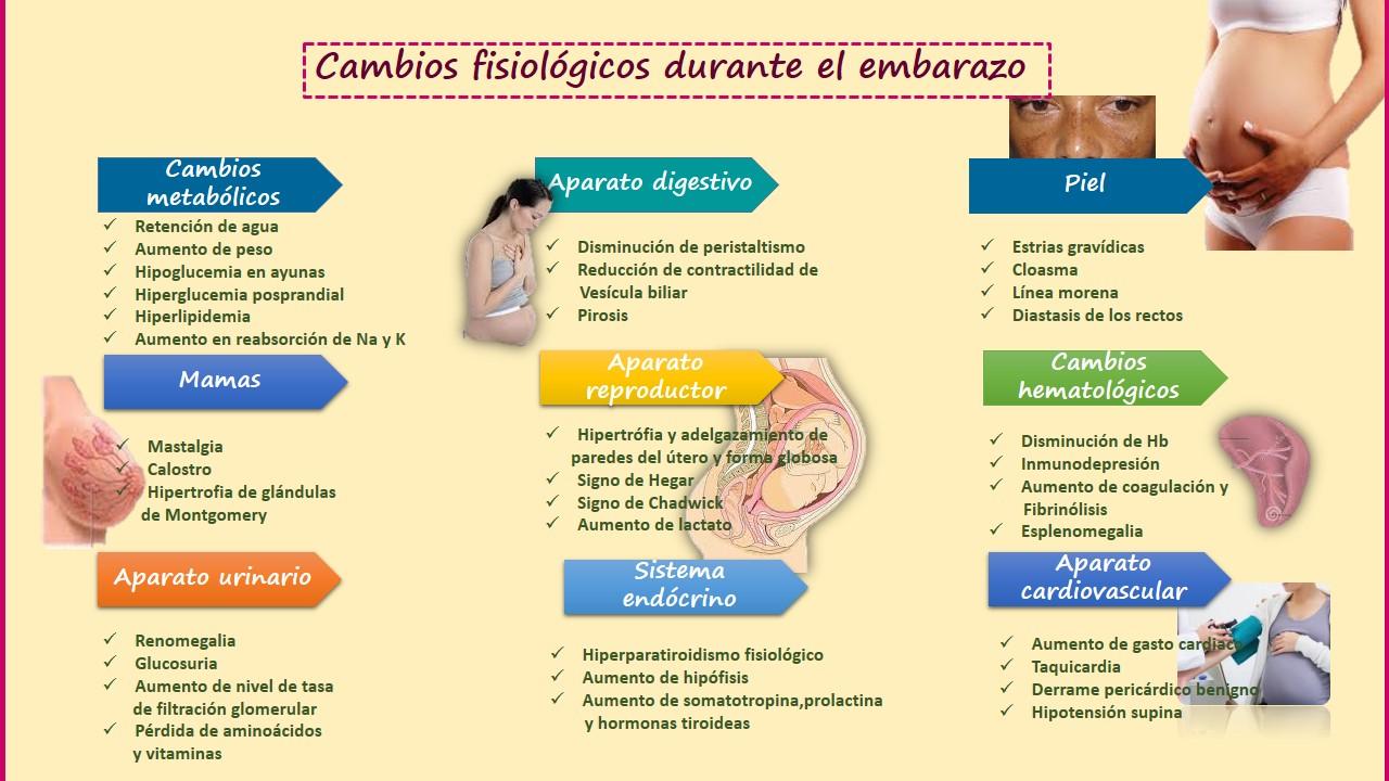 Cambios anatomicos y fisiologicos en el embarazo