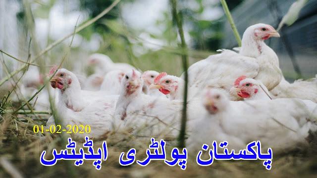 پاکستان پولٹری اپڈیٹ Pakistan poultry updates