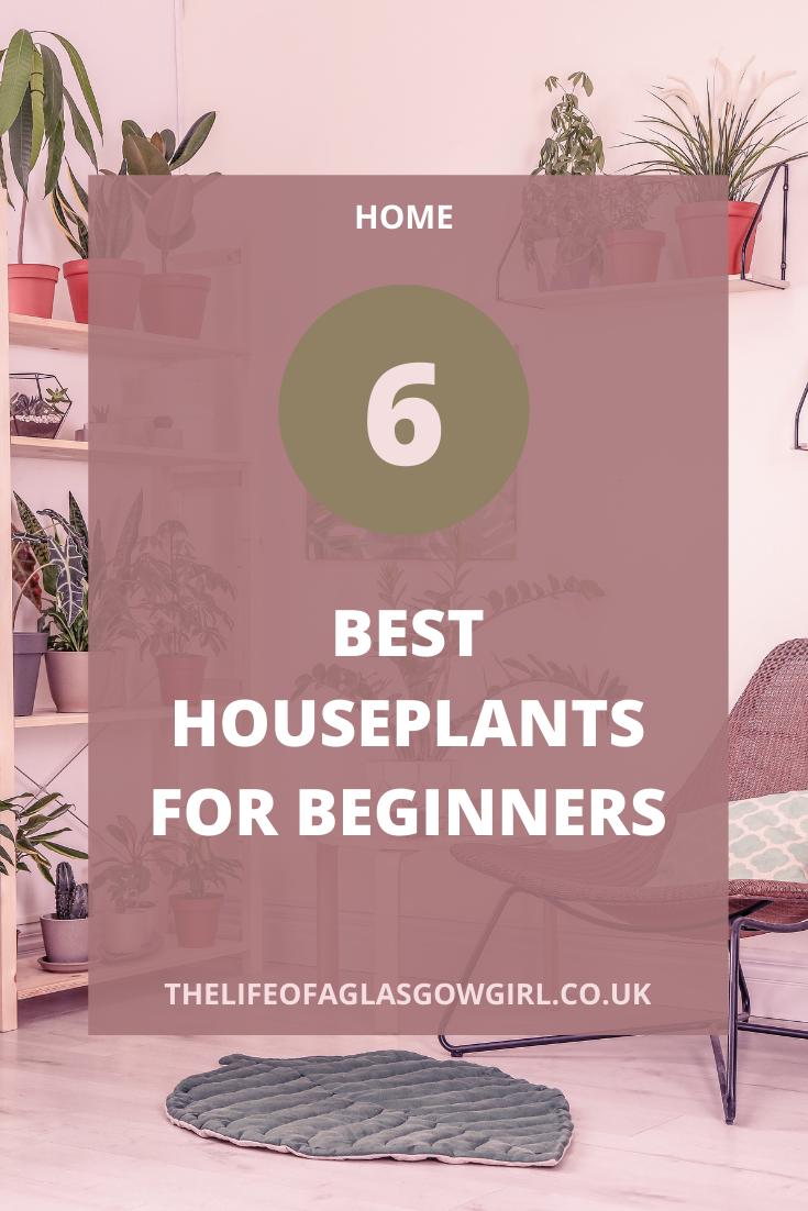 Pinterest Image for 6 Best Houseplants for Beginners
