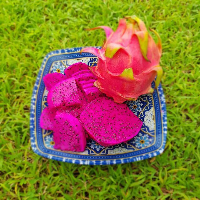 blog with cris, malaysia travel influencer, dragon, dragon fruit, healthy food, antioxidants, raw, low calorie, calories, vitamins, calcium, bones, blood, strength, cancer, diet, weight loss, healthy, life style, fruits, dragon fruit how to eat, dragon fruit benefits, dragon fruit taste, dragon fruit side effects, purple dragon fruit benefits, dragon fruit tree, dragon fruit benefits for diabetes, dragon fruit origin