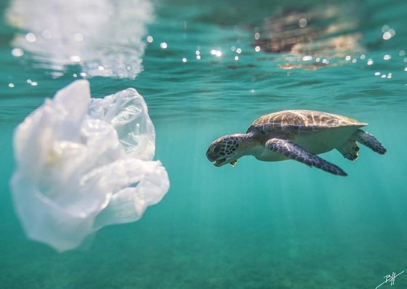 Tartaruga e saco de plástico