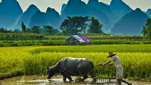 Petani : Antara Profesi dan Korban Ambisi
