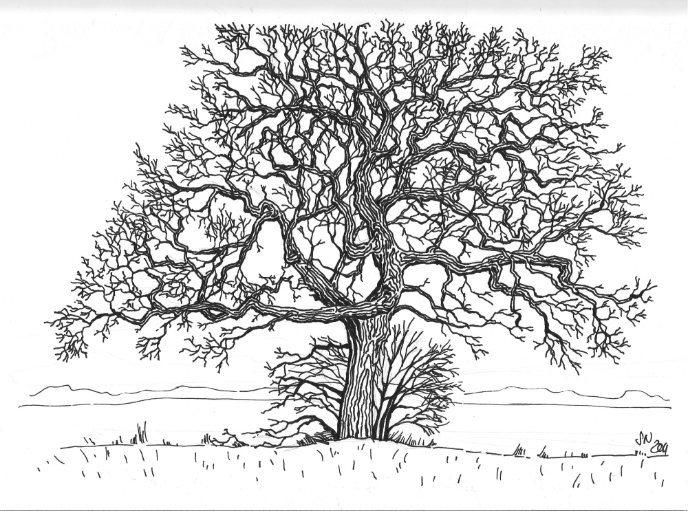 Line drawing tree