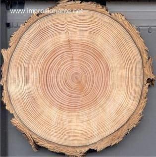 Anillos de crecimiento en tronco de árbol