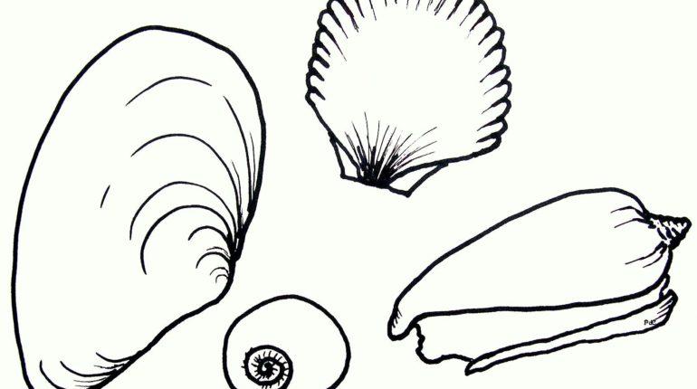 los dibujos para colorear   dibujos de conchas de mar para colorear