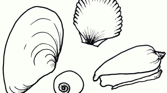 dibujo de conchas para pintar