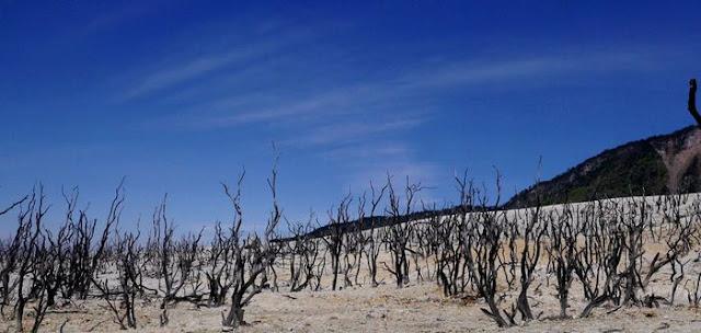 hutan mati papandayan