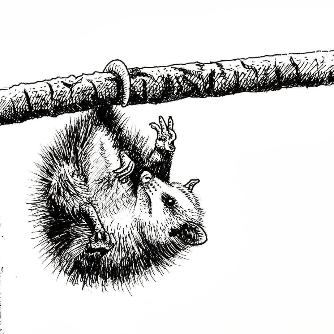 10-Possum-Tim-Rees-www-designstack-co