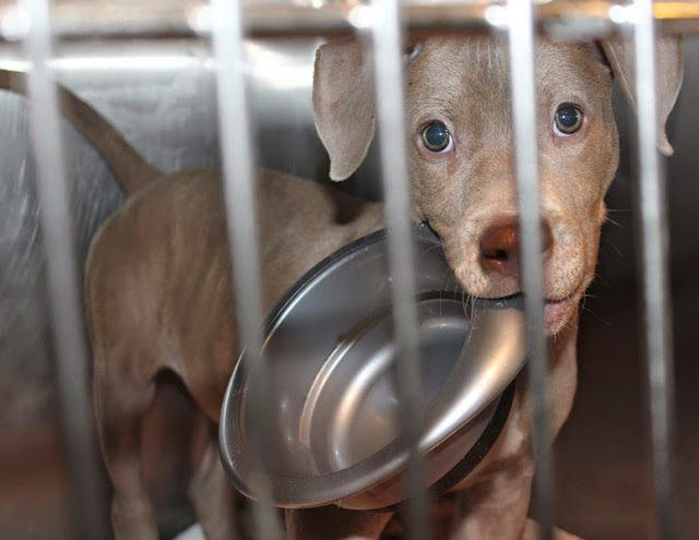 """Give Rights & Shelter to Animals – For We Are Humans... The """"Humane"""" Ones."""