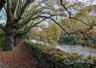 Arching trees and a leaf-strewn path along the Sihl River, Zürich, Switzerland