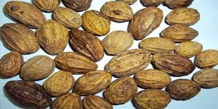 harar herb benefits in urdu
