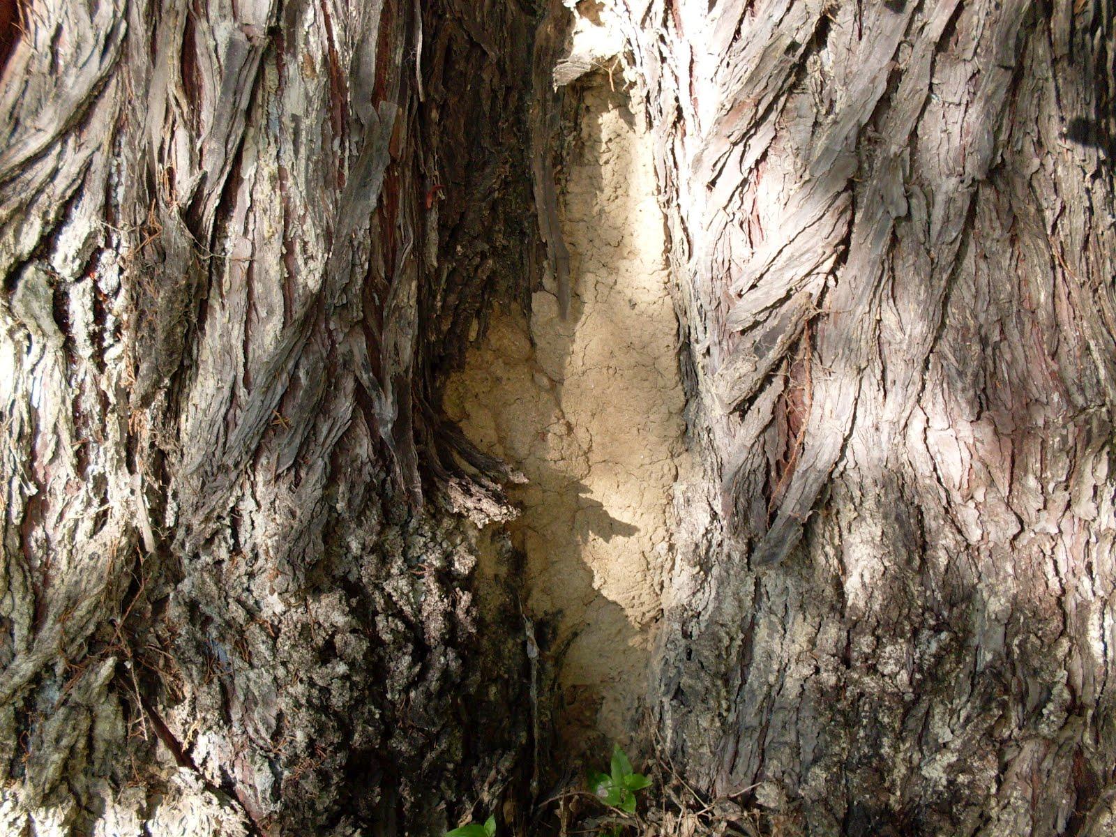 Termite control information: Termites nesting in trees ...