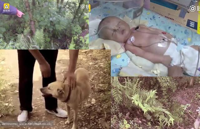 Собака в Китае откопала погребенного заживо младенца!