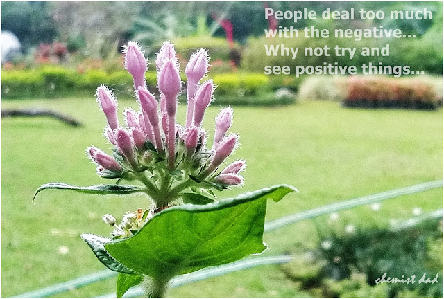 captured moments, life quotes, quotes about flowers, Flower, violet flower,