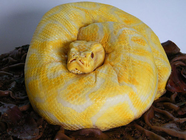 Snake Cake-1