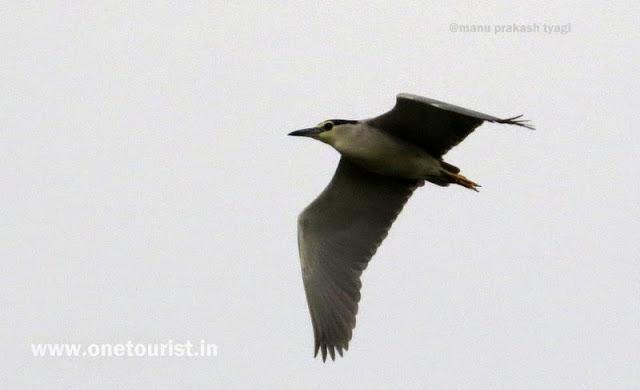 keoladeo national park , Bharatpur , Rajasthan