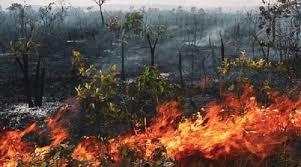 """Bolsonaro, aseguró que los incendios registrados en la Amazonia son """"mentira"""""""