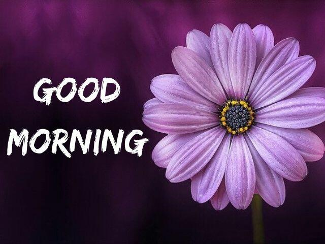 Good Morning Flowers HD Images Download