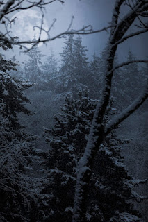 Full moon above a dark forest. Photo by Jesse Orrico on Unsplash.
