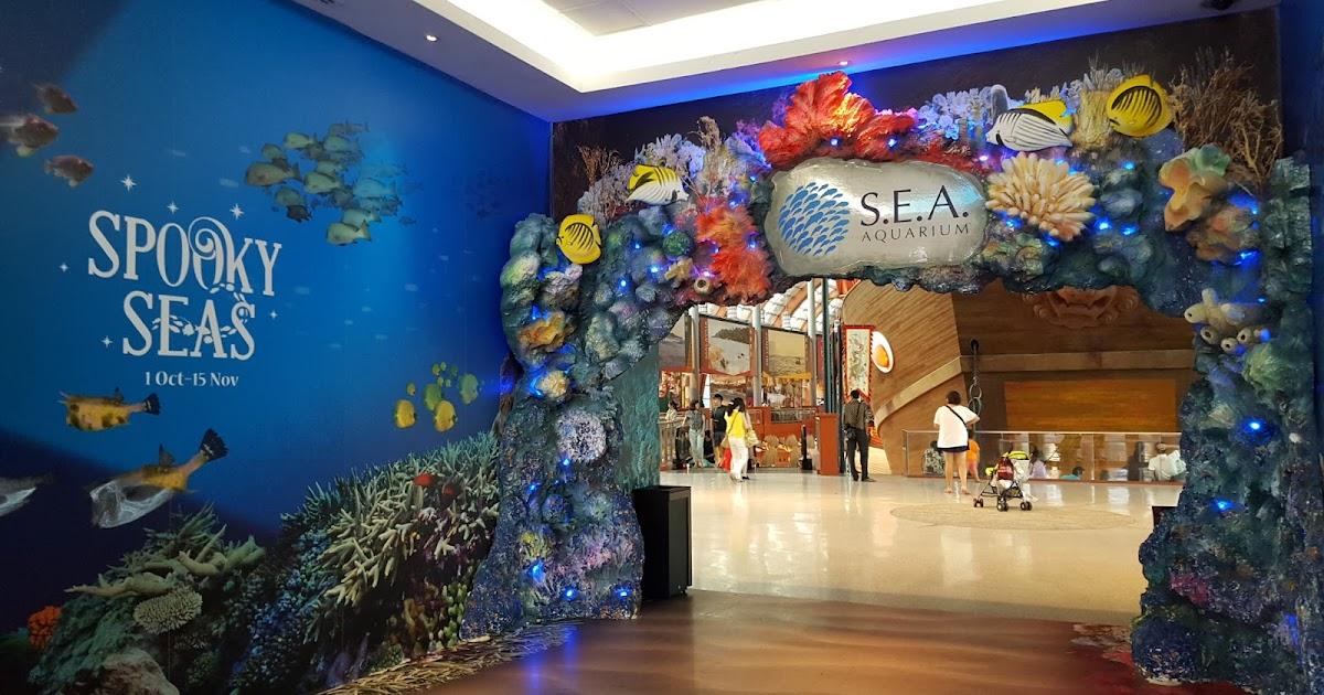 relaxing time at sea aquarium simplyjesme