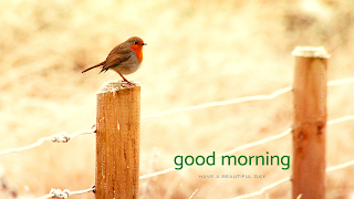 Birds good morning nature greetings