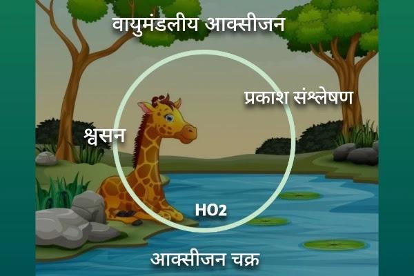 ऑक्सीजन चक्र का चित्र जैव भू रासायनिक चक्र क्या है - biogeochemical cycle in hindi